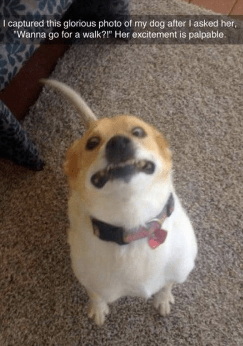 """Dog breed - I captured this glorious photo of my dog after I asked her, """"Wanna go for a walk?!"""" Her excitement is palpable."""