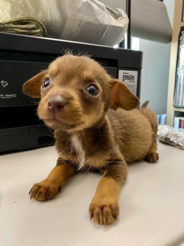 Dog breed - betw genufne RK SMART SERIES