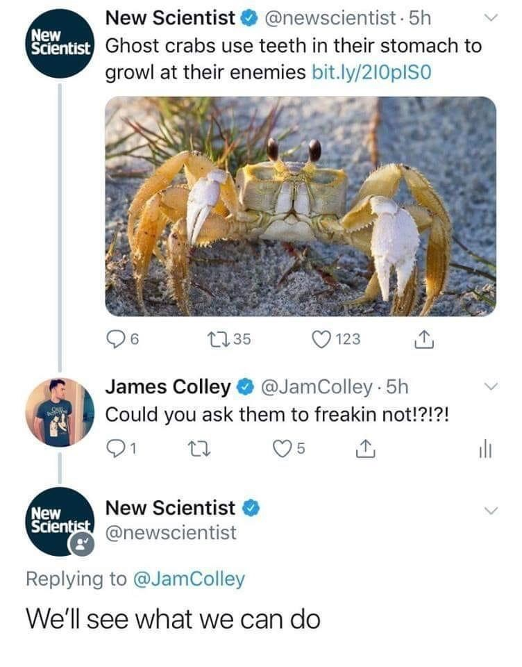 Organism - New Scientist @newscientist 5h Scientist Ghost crabs use teeth in their stomach to growl at their enemies bit.ly/210pIso New 96 27 35 123 James Colley O @JamColley 5h Could you ask them to freakin not!?!?! 1 New Scientist New Scientist @newscientist Replying to @JamColley We'll see what we can do