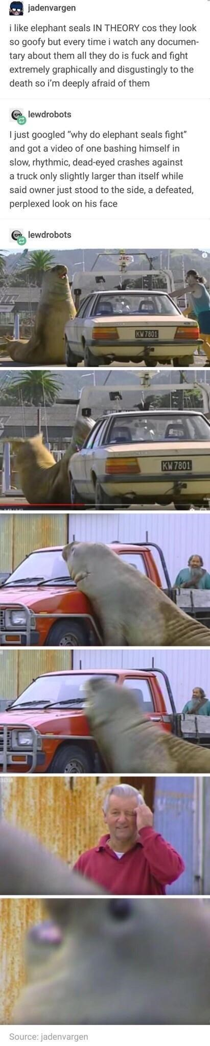 Motor vehicle - jadenvargen i like elephant seals IN THEORY cos they look so goofy but every time i watch any documen- tary about them all they do is fuck and fight extremely graphically and disgustingly to the death so i'm deeply afraid of them lewdrobots I just googled