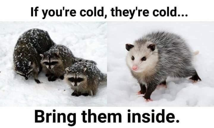 Organism - If you're cold, they're cold... Bring them inside.