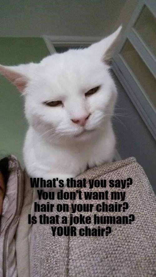 cat memes - 9587390976