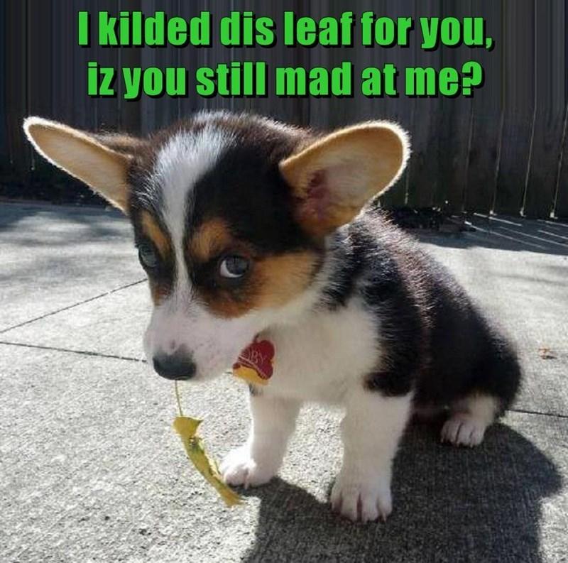 dog memes - 9587391744