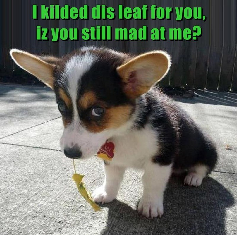 I killed this leaf for you, is you still mad at me? | adorable puppy dog looking sad holding a leaf in its mouth