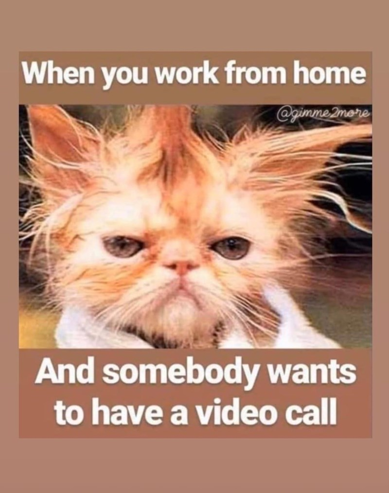 Cat - When you work from home @gimme 2more And somebody wants to have a video call