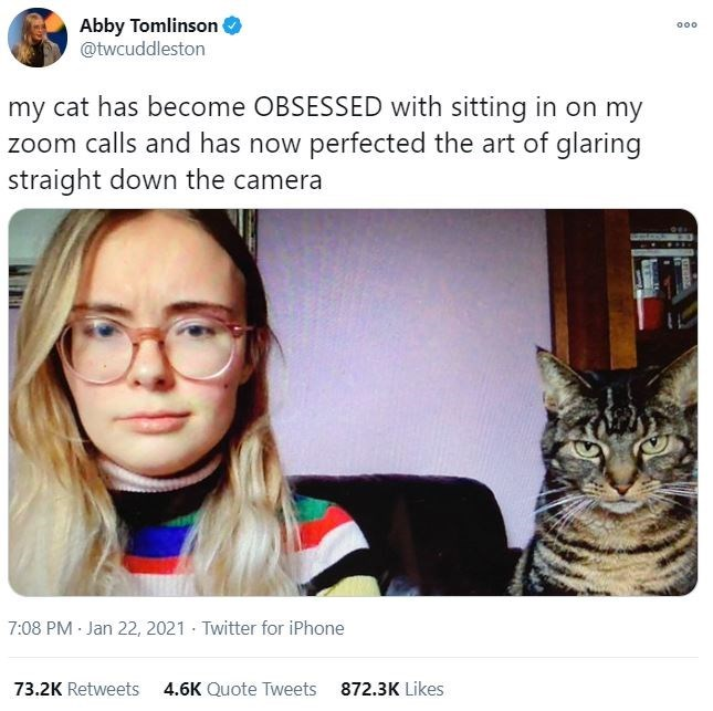 Cat - Abby Tomlinson @twcuddleston 000 my cat has become OBSESSED with sitting in on my zoom calls and has now perfected the art of glaring straight down the camera 7:08 PM Jan 22, 2021 - Twitter for iPhone 73.2K Retweets 4.6K Quote Tweets 872.3K Likes