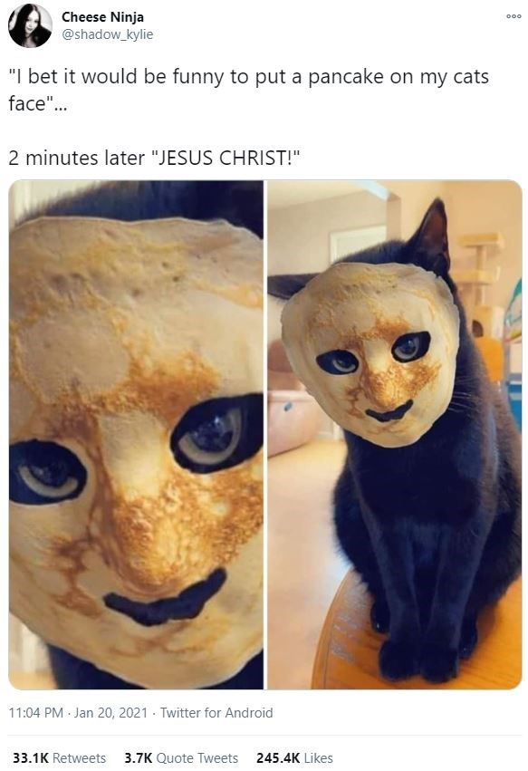 "Cat - Cheese Ninja @shadow_kylie 000 ""I bet it would be funny to put a pancake on my cats face""... 2 minutes later ""JESUS CHRIST!"" 11:04 PM Jan 20, 2021 · Twitter for Android 33.1K Retweets 3.7K Quote Tweets 245.4K Likes"
