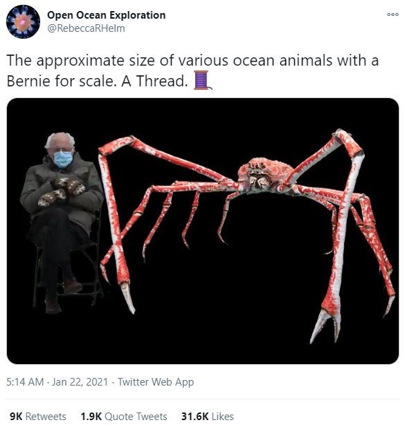 Sleeve - Open Ocean Exploration @RebeccaRHelm 000 The approximate size of various ocean animals with a Bernie for scale. A Thread. 5:14 AM Jan 22, 2021 · Twitter Web App 9K Retweets 1.9K Quote Tweets 31.6K Likes