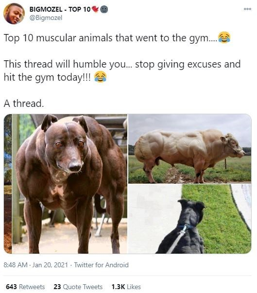 Working animal - BIGMOZEL - TOP 10 @Bigmozel 000 Top 10 muscular animals that went to the gym. This thread will humble you.. stop giving excuses and hit the gym today!!! A thread. 8:48 AM Jan 20, 2021 · Twitter for Android 643 Retweets 23 Quote Tweets 1.3K Likes