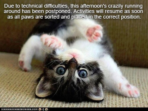 Due to technical difficulties, this afternoon's crazily running around has been postponed. Activities will resume as soon as all paws are sorted and placed in the correct position.   funny kitten lying on its back upside down