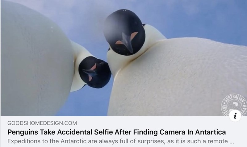 Sky - TRALIAYS GOODSHOMEDESIGN.COM Penguins Take Accidental Selfie After Finding Camera In Antartica Expeditions to the Antarctic are always full of surprises, as it is such a remote .. ORAM• PeANTA