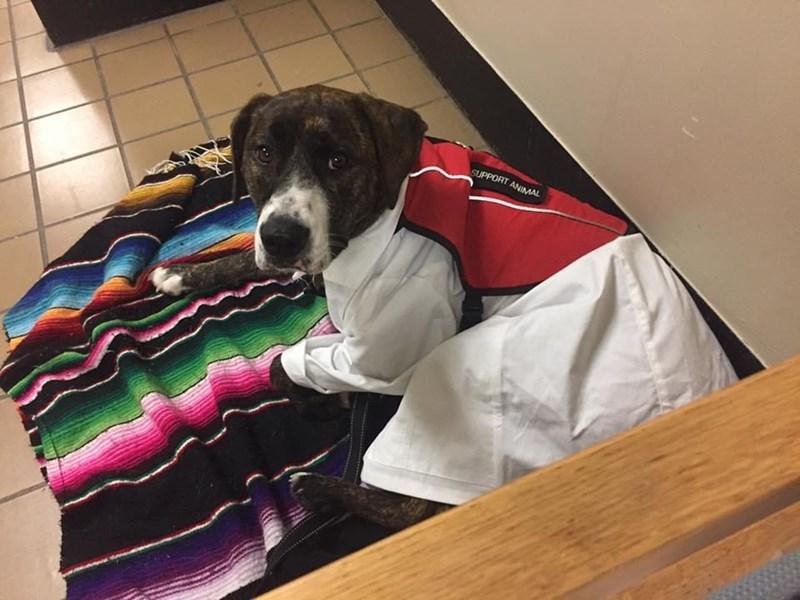 Dog - SUPPORT ANIMAL