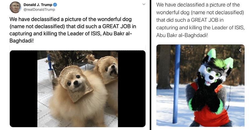 Funny memes about dogs, donald trump, declassified dog photos, abu bakr al-baghdadi.
