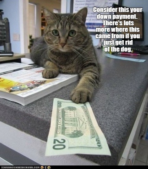 consider this your down payment. There's lots more where this came from it you just get rid of the dog | funny pic of a cat sliding a 20 dollar bill to the viewer