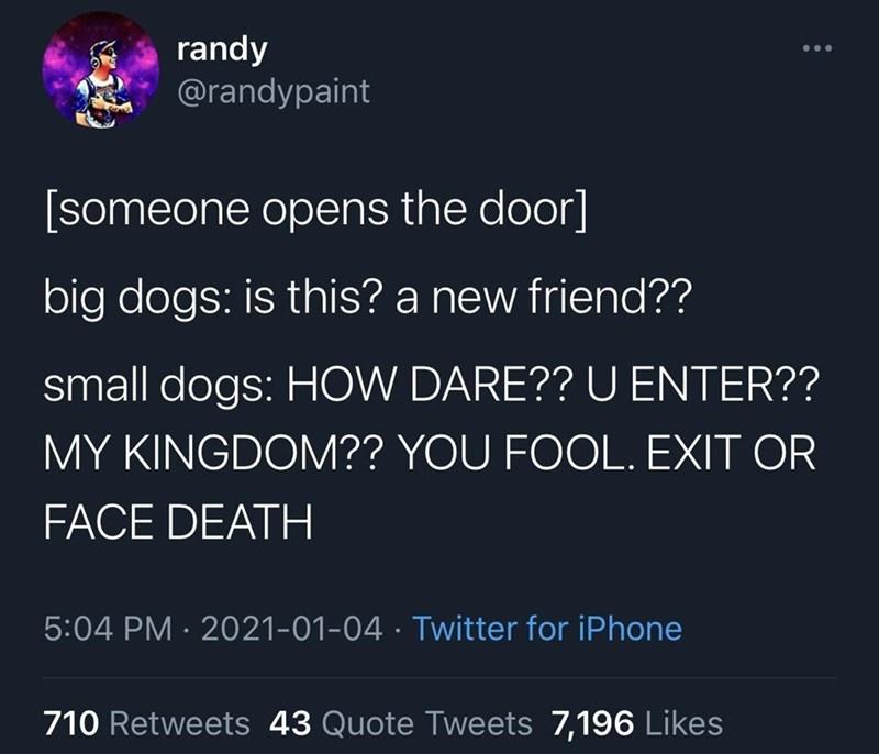Organism - randy @randypaint [someone opens the door] big dogs: is this? a new friend?? small dogs: HOW DARE?? U ENTER?? MY KINGDOM?? YOU FOOL. EXIT OR FACE DEATH 5:04 PM · 2021-01-04 · Twitter for iPhone 710 Retweets 43 Quote Tweets 7,196 Likes