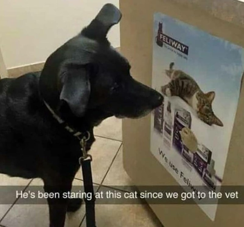 He's staring at this cat since we got to the vet | funny pic of a black dog looking closely at a poster of a cat