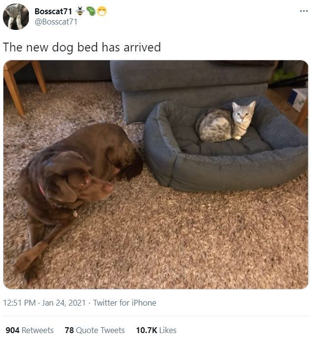 Brown - Bosscat71 O @Bosscat71 ... The new dog bed has arrived 12:51 PM - Jan 24, 2021 · Twitter for iPhone 904 Retweets 78 Quote Tweets 10.7K Likes