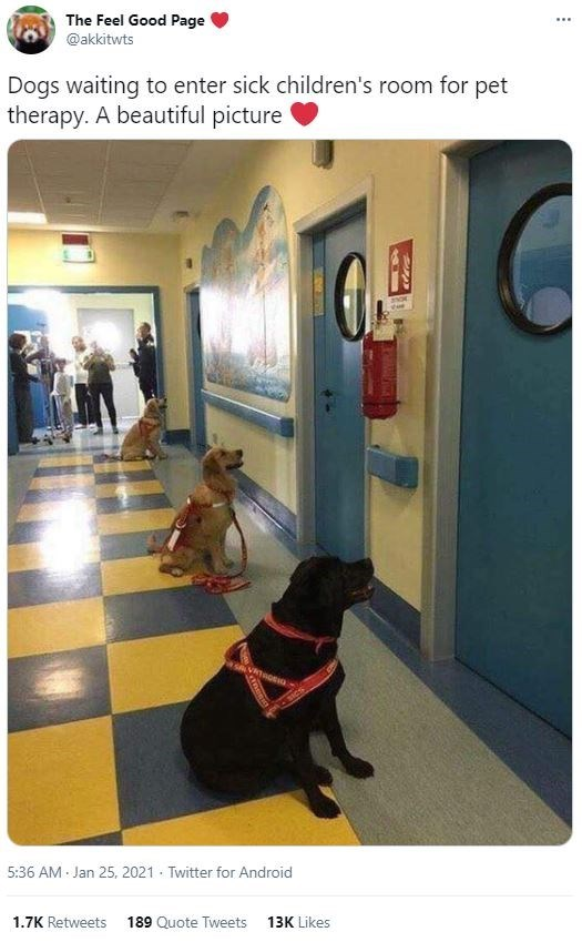 Dog - The Feel Good Page @akkitwts ... Dogs waiting to enter sick children's room for pet therapy. A beautiful picture SICS 5:36 AM Jan 25, 2021 · Twitter for Android 1.7K Retweets 189 Quote Tweets 13K Likes