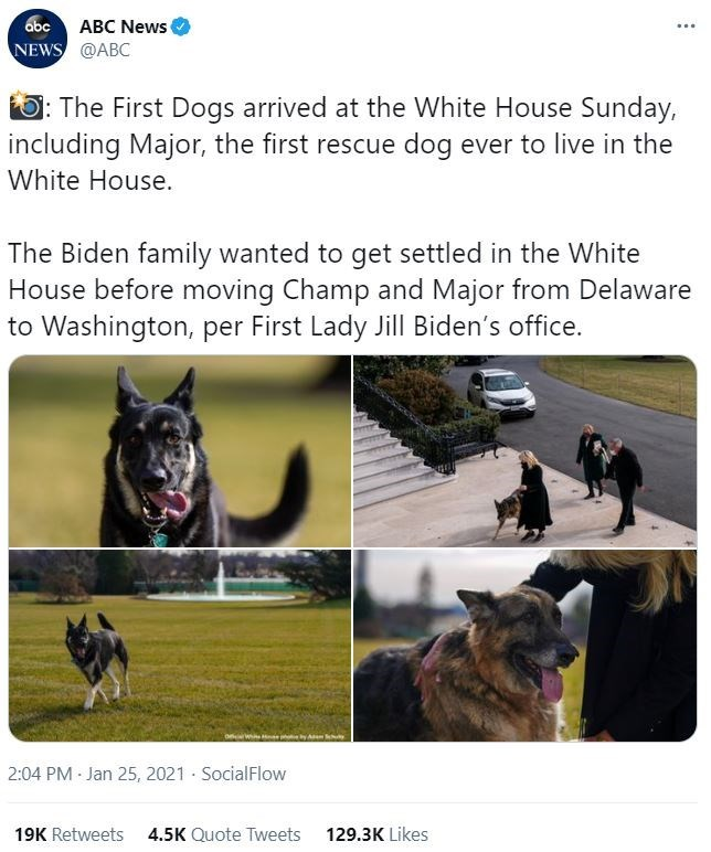 Dog - abc ABC News NEWS @ABC ... : The First Dogs arrived at the White House Sunday, including Major, the first rescue dog ever to live in the White House. The Biden family wanted to get settled in the White House before moving Champ and Major from Delaware to Washington, per First Lady Jill Biden's office. 2:04 PM - Jan 25, 2021 SocialFlow 19K Retweets 4.5K Quote Tweets 129.3K Likes