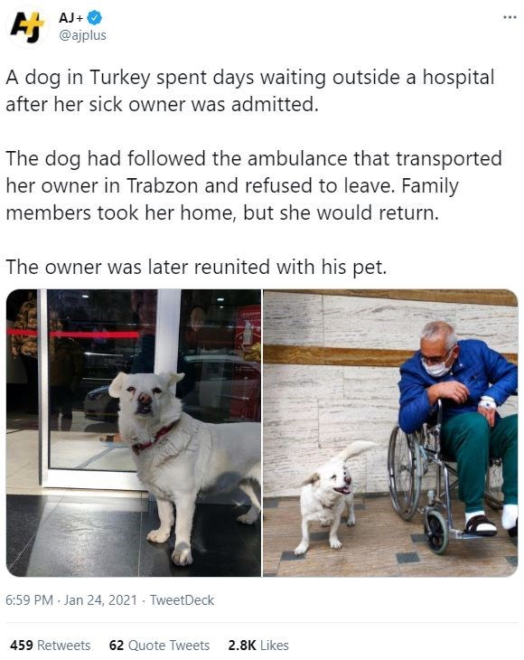 Dog - AJ+ Ej @ajplus ... A dog in Turkey spent days waiting outside a hospital after her sick owner was admitted. The dog had followed the ambulance that transported her owner in Trabzon and refused to leave. Family members took her home, but she would return. The owner was later reunited with his pet. 6:59 PM - Jan 24, 2021 - TweetDeck 459 Retweets 62 Quote Tweets 2.8K Likes
