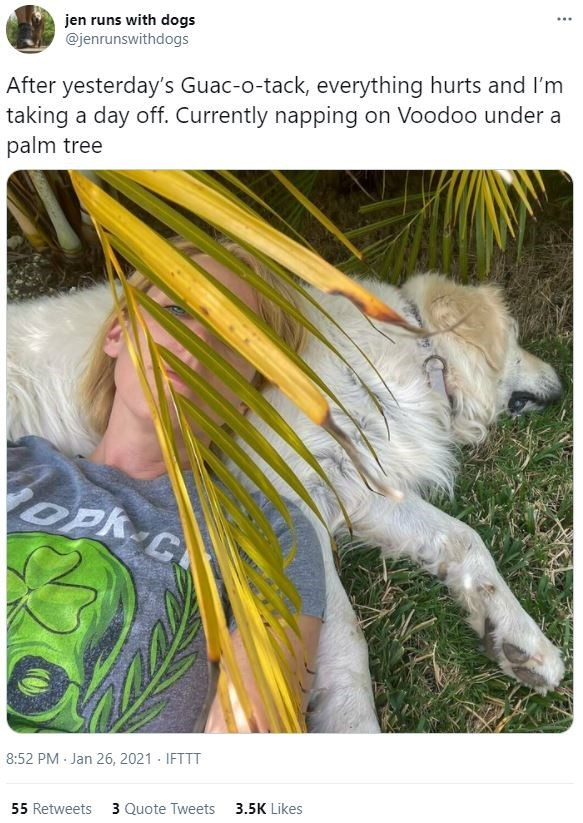 Organism - ... jen runs with dogs @jenrunswithdogs After yesterday's Guac-o-tack, everything hurts and I'm taking a day off. Currently napping on Voodoo under a palm tree OPh C 8:52 PM Jan 26, 2021 - IFTTT 55 Retweets 3 Quote Tweets 3.5K Likes