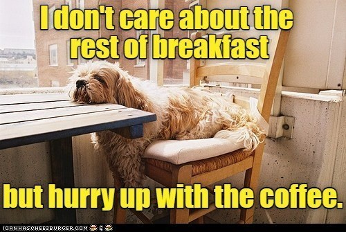 I don't care about the rest of breakfast but hurry up with the coffee. | funny pic of a tired dog resting its head on a table