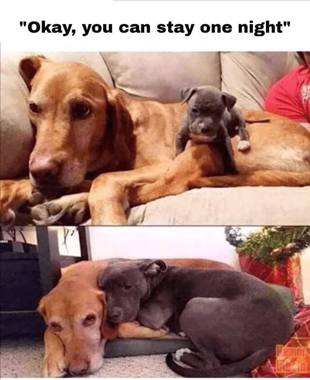 """Okay, you can stay one night"" 