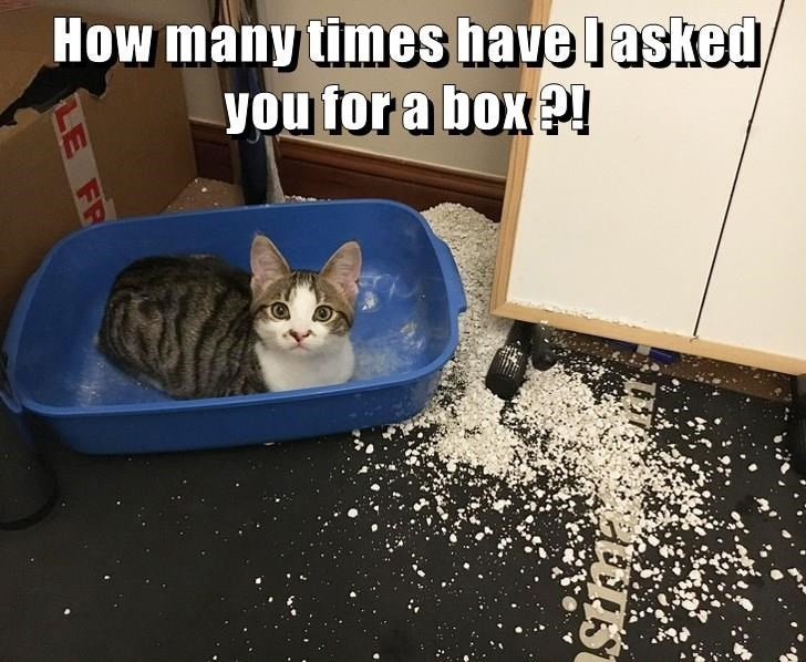 How many times have I asked you for a box ?! | funny pic of a cat sitting in an empty litter box with all the litter spread around it