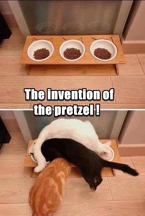 The invention of the pretzel | funny pic of 3 three cats climbing on top of each other to eat from their bowls