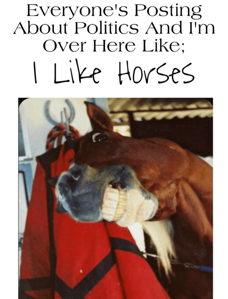 Horse - Everyone's Posting About Politics And I'm Over Here Like; | Like Horses