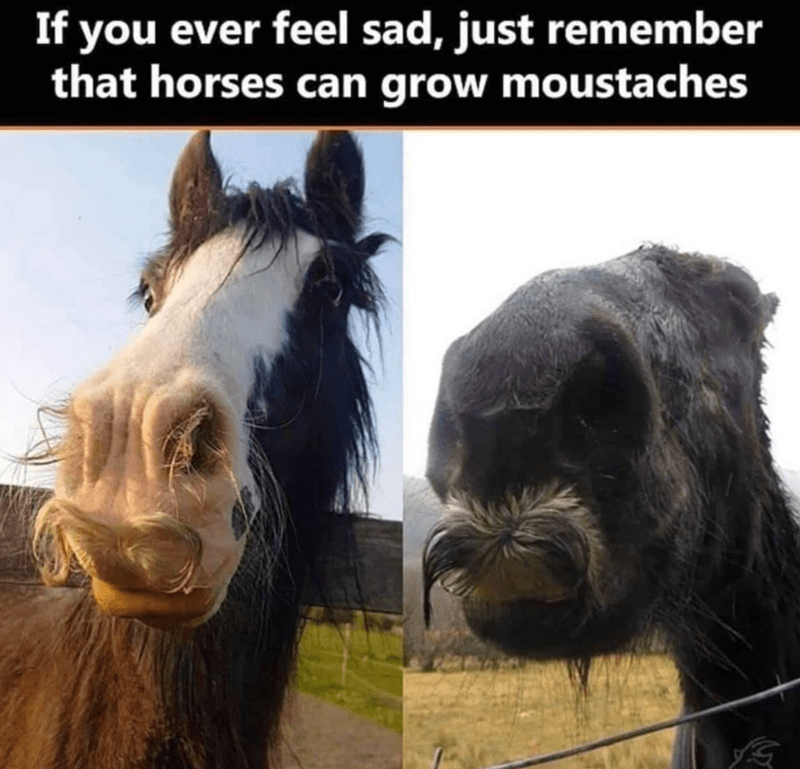 Horse - If you ever feel sad, just remember that horses can grow moustaches