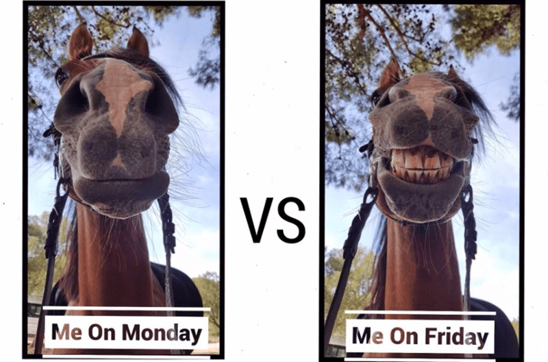 Head - VS Me On Monday Me On Friday