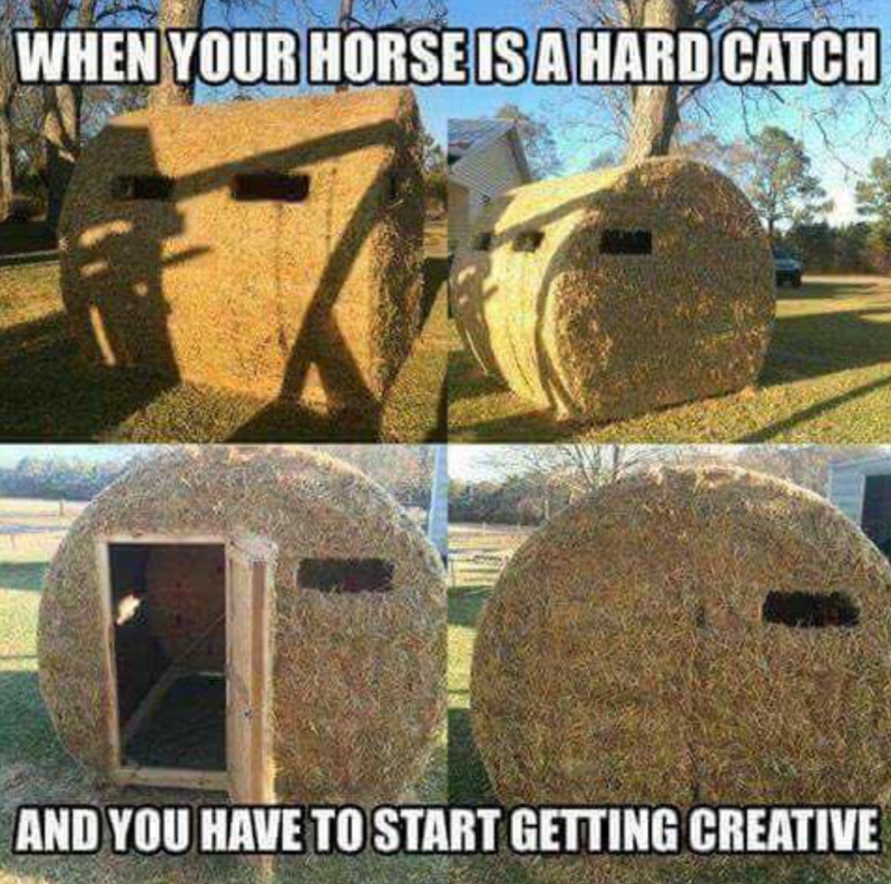 Plant - WHEN YOUR HORSE ISA HARD CATCH AND YOU HAVE TO START GETTING CREATIVE