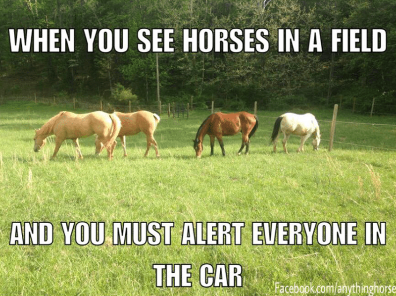 Horse - WHEN YOU SEE HORSES IN A FIELD AND YOU MUST ALERT EVERYONE IN THE CAR Facebook.com/anythinghorse