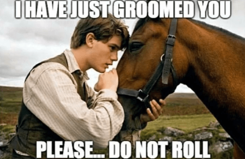 Horse - IHAVE JUST GROOMED YOU PLEASE. DO NOT ROLL