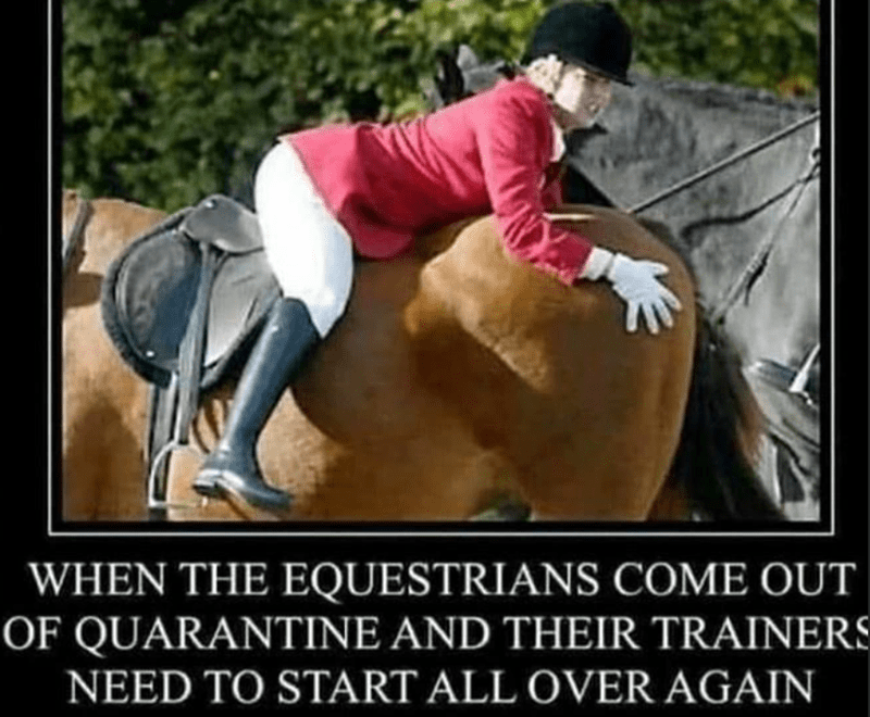 Helmet - WHEN THE EQUESTRIANS COME OUT OF QUARANTINE AND THEIR TRAINERS NEED TO START ALL OVER AGAIN