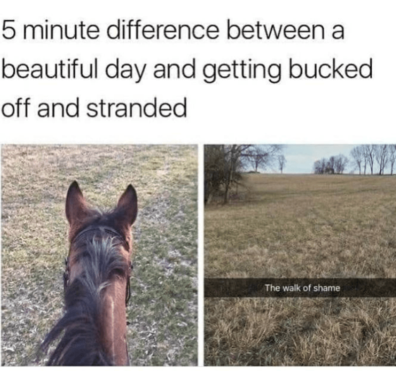 Horse - 5 minute difference between a beautiful day and getting bucked off and stranded The walk of shame