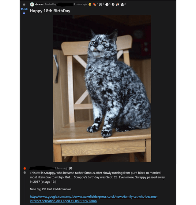 Felidae - r/aww Posted by 4 hours ago 11.5k Happy 18th BirthDay 2 hours ago This cat is Scrappy, who became rather famous after slowly turning from pure black to mottled- most likely due to vitilgo. But. Scrappy's birthday was Sept. 23. Even more, Scrappy passed away in 2017 (at age 19.) Nice try, OP, but Reddit knows. https://www.google.com/amp/s/www.wakefieldexpress.co.uk/news/family-cat-who-became- internet-sensation-dies-aged-19-860199%3famp