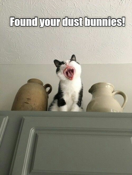 Found your dust bunnies! | smol kitten screaming from the top shelf
