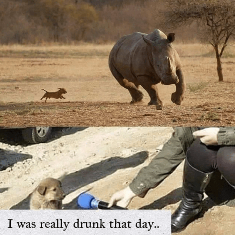 funny memes, stupid memes, animal memes | I was really drunk that day.. puppy being interviewed after chasing a rhino