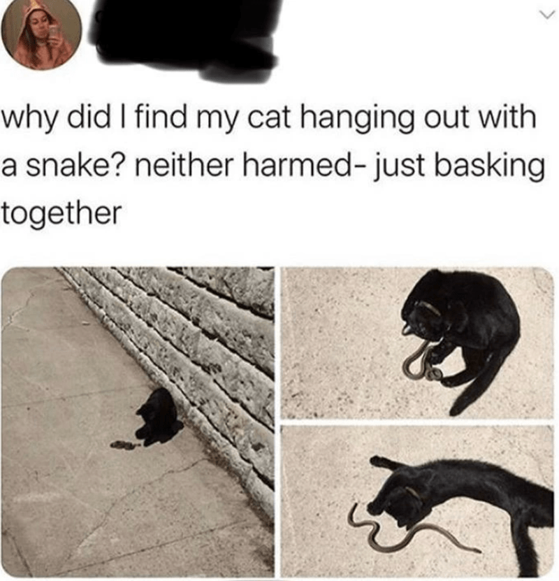 funny memes, animal memes, funny tweets | why did I find my cat hanging out with a snake? neither harmed- just basking together