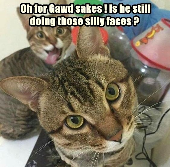 on for God sake ! Is he still doing the silly faces | funny pic of a cat looking serious with another cat making a silly face in the background