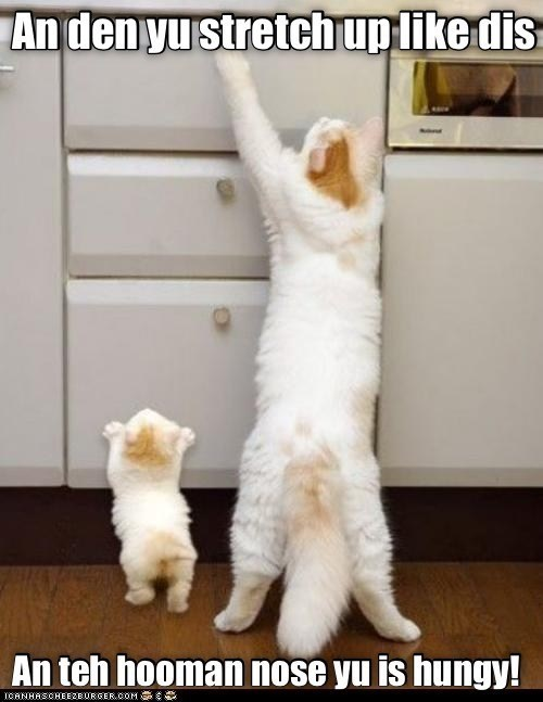 and then you stretch up like this and the human knows you is hungry | adult cat teaching tiny kitten how to get food