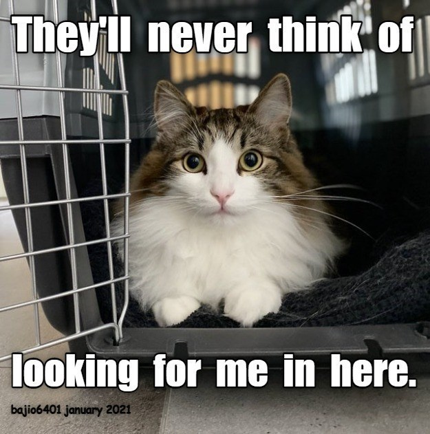 They'll never think of looking for me in here | cute cat hiding inside a cat carrier
