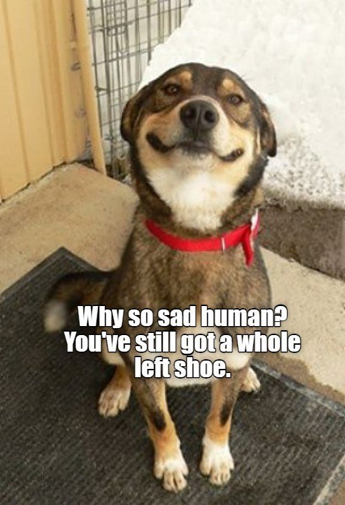 Why so sad human? You've still got a whole left shoe | cute dog smiling proudly