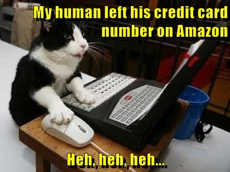 my human left his credit card number on Amazon Heh,.heh, heh.. | funny pic of a cat using a small computer with its paw on the mouse