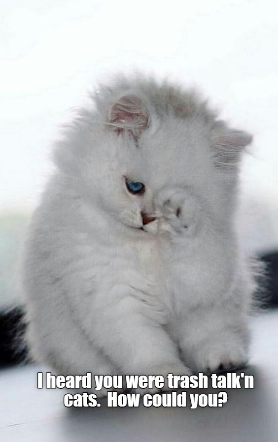 I heard you were trash talking cats. How could you? | adorable little white kitten wiping its eyes with its paw