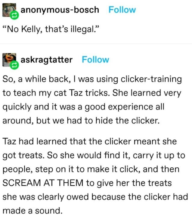 """Font - anonymous-bosch Follow """"No Kelly, that's illegal."""" askragtatter Follow So, a while back, I was using clicker-training to teach my cat Taz tricks. She learned very quickly and it was a good experience all around, but we had to hide the clicker. Taz had learned that the clicker meant she got treats. So she would find it, carry it up to people, step on it to make it click, and then SCREAM AT THEM to give her the treats she was clearly owed because the clicker had made a sound."""