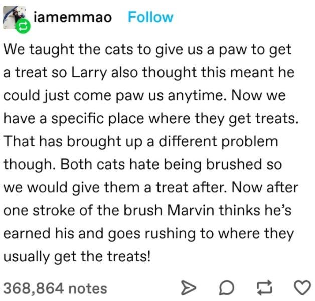Font - iamemmao Follow We taught the cats to give us a paw to get a treat so Larry also thought this meant he could just come paw us anytime. Now we have a specific place where they get treats. That has brought up a different problem though. Both cats hate being brushed so we would give them a treat after. Now after one stroke of the brush Marvin thinks he's earned his and goes rushing to where they usually get the treats! 368,864 notes  D
