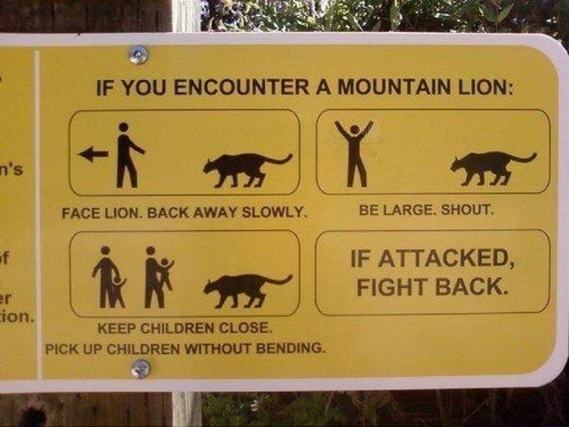 Organism - IF YOU ENCOUNTER A MOUNTAIN LION: n's FACE LION. BACK AWAY SLOWLY. BE LARGE. SHOUT. of IF ATTACKED, FIGHT BACK. er ion. KEEP CHILDREN CLOSE. PICK UP CHILDREN WITHOUT BENDING.